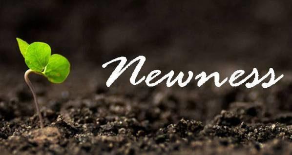 newness e1597851313259