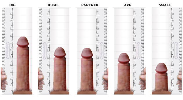 penis size all